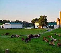 The dream farm George and Lennie wants