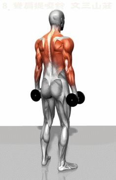 The muscles involved in the dumbbell shrug exercise. The agonist (active) and stabilizer muscles are highlighted. Gym Workout Tips, Easy Workouts, Workout Videos, At Home Workouts, Kettlebell Training, Dumbbell Workout, Fitness Tips, Fitness Motivation, Workout Exercises
