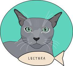 Lucynka #kot #cat #pet_portrait #cat_portrait #russian_blue #rosyjski_niebieski #portrety #koty #cats