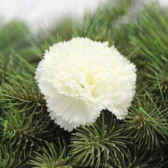 Vazbové květy pro vaše tvoření Dandelion, Flowers, Plants, Dandelions, Plant, Taraxacum Officinale, Royal Icing Flowers, Flower, Florals