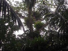 entre palmeiras.