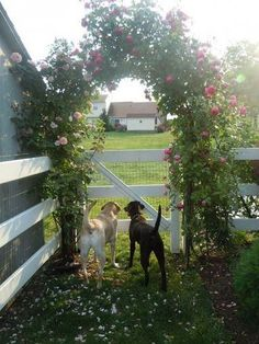 arbor amazingness Idea Box by Funky Junk Interiors – Donna Don't know which I love more. The arbor or the puppies Front Yard Fence, Farm Fence, Dog Fence, Horse Fence, Pallet Fence, Fence Landscaping, Backyard Fences, Garden Fencing, Fenced Yard