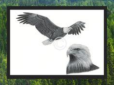 Weißkopfseeadler im Flug Print von PortraitsByNature auf Etsy