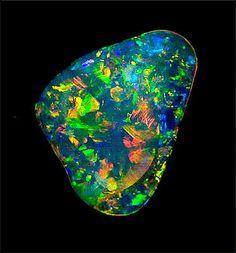 Harlequin Black Opal
