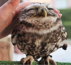 Lovely owl!