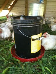 How to make a chicken waterer. Outstanding!!! I was just contemplating how to make one of these a couple days ago!