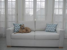 Cute doggie pic from British Sofa Manufacturers sofabedsofa.com