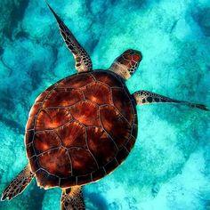 Les Bahamas ça vous tente?  #voyagevoyage #destination #bahamas #mer #voyage #aventure #plongée #caraibes #blogvoyage #instatravel