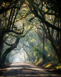 The beautiful rural roads of South Carolina