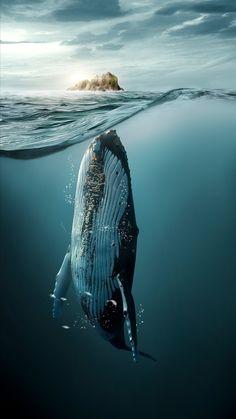We break for beauty~ Art by Jose Paulo Ocean Wallpaper, Animal Wallpaper, Beautiful Sea Creatures, Animals Beautiful, Underwater Photography, Animal Photography, Scary Ocean, Underwater Animals, Ocean Underwater