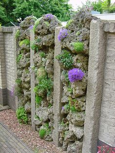 Noel's Garden Blog: Where have all the alpines gone?