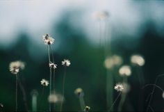 See what Brenda Paz Castillo (brendapazca) found on We Heart It, your everyday app to get lost in what you love. Kodak Film, Good Energy, Lomography, Film Photography, Dandelion, Camera Nikon, Flowers, Collection, Connect