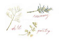 Watercolour Herbs - Susan Brand Design