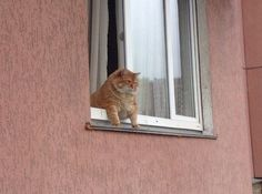 Found this chubby cat leaning out of neighbor's window