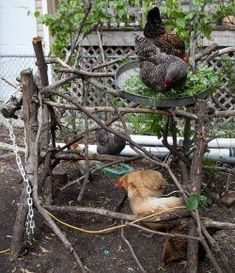 DIY Chicken Jungle Gym