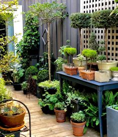You don't need a lot of space to have a lush garden. Topiary Garden, Lush Garden, Garden Cottage, Garden Planters, Dream Garden, Topiaries, Small Courtyard Gardens, Small Gardens, Ground Cover Plants