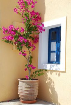Design Decor & Disha: Bougainvillea And Outdoors