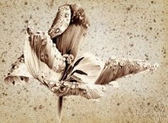 Fonds d'écran Art - Peinture L'Appel de la Tulipe