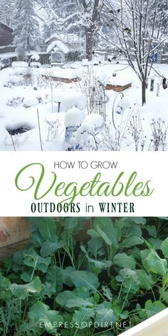 You can grow many cool-loving vegetables in protected raised beds outdoors in winter in a cold climate.#gardening #wintergarden #vegetablegarden #veggiegarden #coldclimategardening #empressofdirt