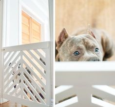 Dog Gate - LOVE this doggy gate - full tutorial on how to make it!