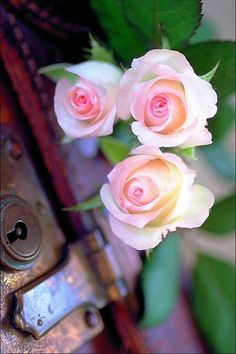 Pastel Pink Trio of Roses