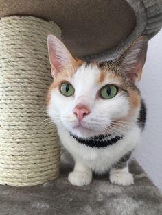 Effie Katze | Pawshake Hattersheim am main