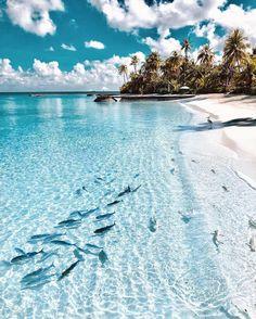 New travel photography beach heavens Ideas Photography Beach, Travel Photography, Beach Pictures, Travel Pictures, Maldives Travel, Maldives Beach, Maldives Islands, The Beach, Summer Beach