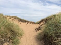 """See 95 photos and 6 tips from 412 visitors to Tylösand strand. """"If you're in Halmstad, it's a must. Beautiful beach, a lot of nature, and peacefulness. Places In Europe, Denim Skirts, Beautiful Beaches, Be Perfect, Summer Beach, Heaven, Country Roads, Shorts, Nature"""