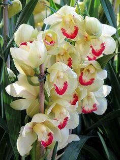 ♥ Longwood Gardens Orchid Extravaganza