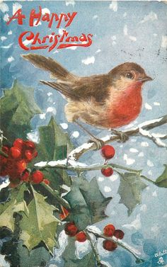 A HAPPY CHRISTMAS  robin on holly branch, bird facing right, berries below