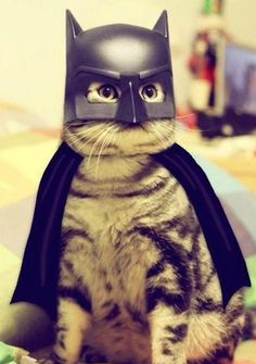 It's Bat Cat.
