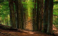 Tree Avenue by Dirk Seifert on 500px