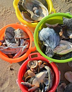Shells from Assateague Island