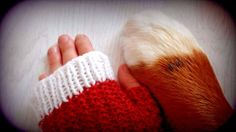 Hand knitted mittens, Bernese Mountain Dog paws, wrist warmers