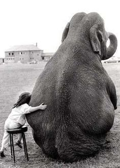 Gentle Giant...