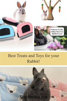 The top treats and toys for rabbits (2021) updated regularly. we sell only the best quality rabbit gifts, treats, toys, and more! Rabbit Toys, Pet Rabbit, Cute Baby Bunnies, Cute Babies, Rabbit Information, Rabbit Eating, Wild Rabbit, Bunny Care, House Rabbit