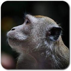 https://play.google.com/store/apps/details?id=com.sparsekids.apps.zoo