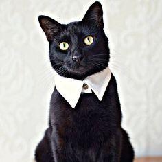 handmade cat shirt collar by all things brighton beautiful | notonthehighstreet.com