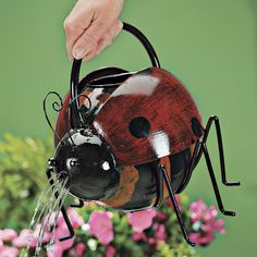 Ladybug Watering Can - Pest Control, Household Gadgets, Outdoor Solutions, Home and Garden Problem Solutions | Whatever Works