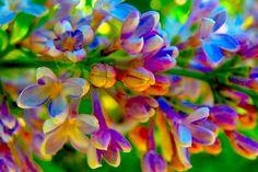 какого цвета бывает сирень фото: 17 тыс изображений найдено в Яндекс.Картинках