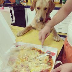 Labradors.com Member Photo - OH Hi! I'd like some pizza! #funny #labrador