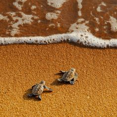 turtel on the beach