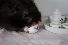 hamster tea time