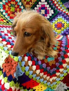 Gorgeous granny square #crochet blanket - even pup loves it :)