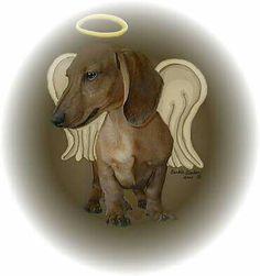 Nicky I miss u every day my angel dog♡♡♡♡