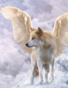 Dogs With Angel Wings Dogs angels wings wolf