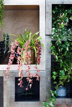 Cymbidium Cascade met bruinroze bloemen. Bijna een hangplant.