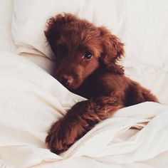 We'd love to be cuddling in a bed with a puppy right now.