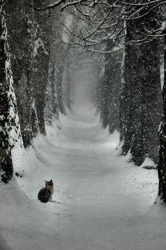 """* * CAT: """" Gotta getz de hell outta dis frozen wasteland. Me wandered too fars a snow covereds field."""""""