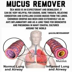 Clear lungs and mucus Health Facts, Health And Nutrition, Health Tips, Health And Wellness, Health Articles, Health Benefits, Natural Health Remedies, Natural Cures, Natural Healing